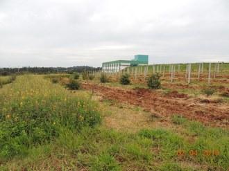 Imagem mostra plantas cultivadas no pomar do Campus Laranjeiras do Sul. Ao fundo do pomar pode ser observada parte da estrutura do Bloco Docente/Administrativo do Campus.