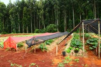 Foto mostra canteiros onde são plantadas hortaliças. Os canteiros estão cobertos com malhas de sombreamento.