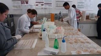 A foto mostra um laboratório onde alguns estudantes estão manuseando as sementes de milho, dispostas em uma bancada.