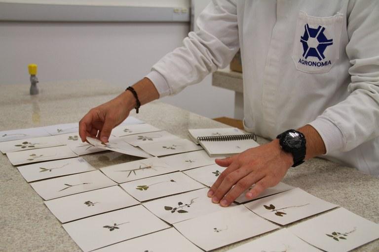 27092017 - Laboratório Ciência Plantas espontâneas (7).JPG