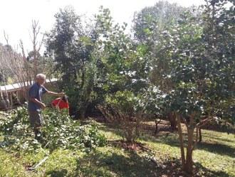 Na foto duas pessoas realizam o manejo de árvores frutíferas.