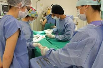 Profissionais da área de Medicina Veterinária realizando processo cirúrgico