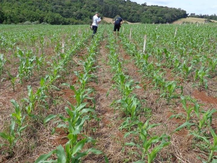 06-11-2014 - Agricultura.jpg