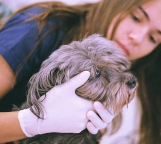 Aluna, de luvas, segura o rosto de um cachorro cinza.